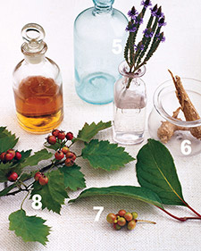 The 17 Best Medicinal Herbs